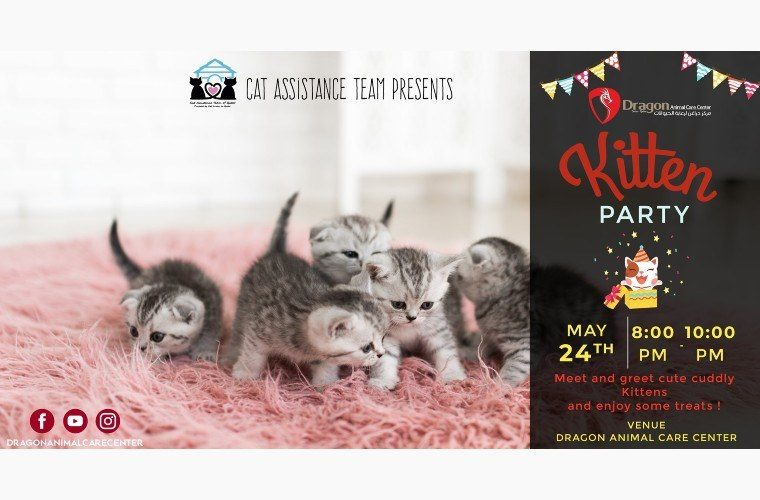 Kitten Party at Dragon Animal Care Center