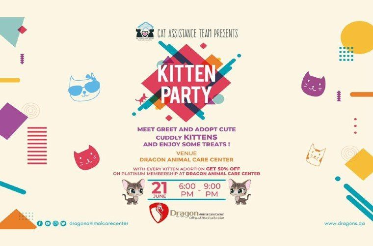 Dragon Animal Care Center Kitten Party