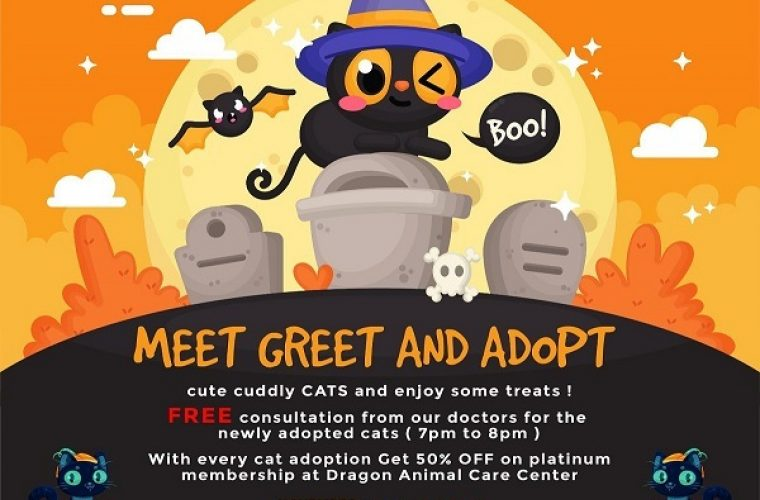 Cat Adoption Party at Dragon Animal Care Center