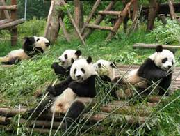 MME to build panda shelter, 18 new parks in 2021